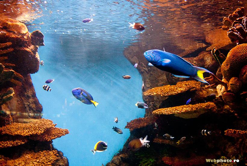 Beautiful exotic fish in the aquarium in barcelona photo for Electric fish tank