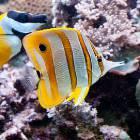 beautiful_fish