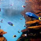 electric_fish