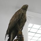 vultur impaiat