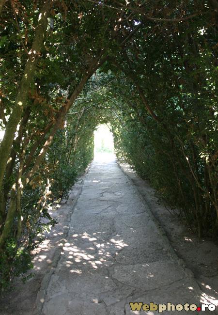 tunel verde