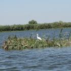 Delta-Dunarii