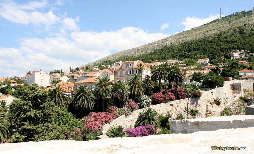 cartier rezidential