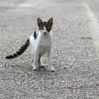 cat_road