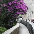 purple_sidewalk
