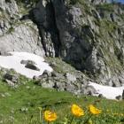 flori munte