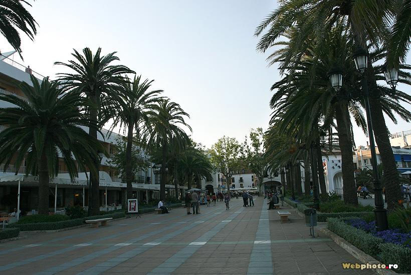 alee palmieri