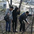 in copaci