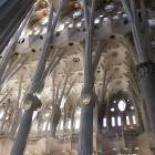 columns forest