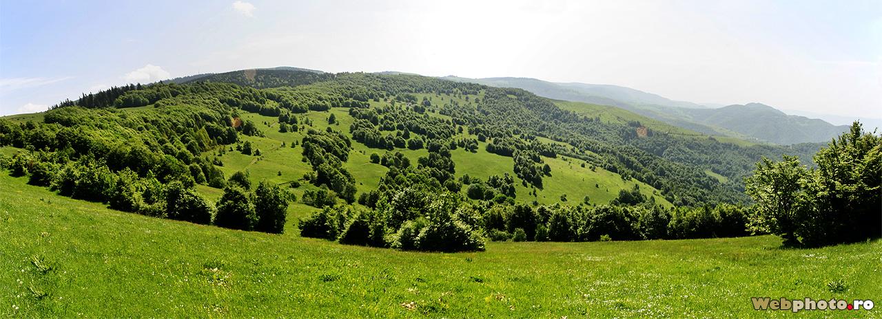 campii verzi