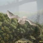 pasare zbor