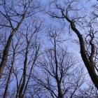 copaci cer albastru