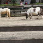 poneii