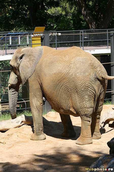 One of the most complete zoo gardens in europe barcelona for Elephant barcellona