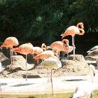 flamingo_colony
