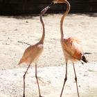 flamingo_love
