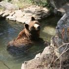 pond bear